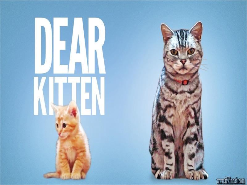 dear-kitten-videos-vacuum What I Wish I Knew a Year Ago About Dear Kitten Videos Vacuum
