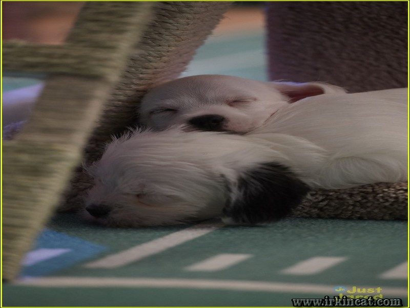 kitten-bowl-wiki Unbiased Report Exposes the Unanswered Questions on Kitten Bowl Wiki