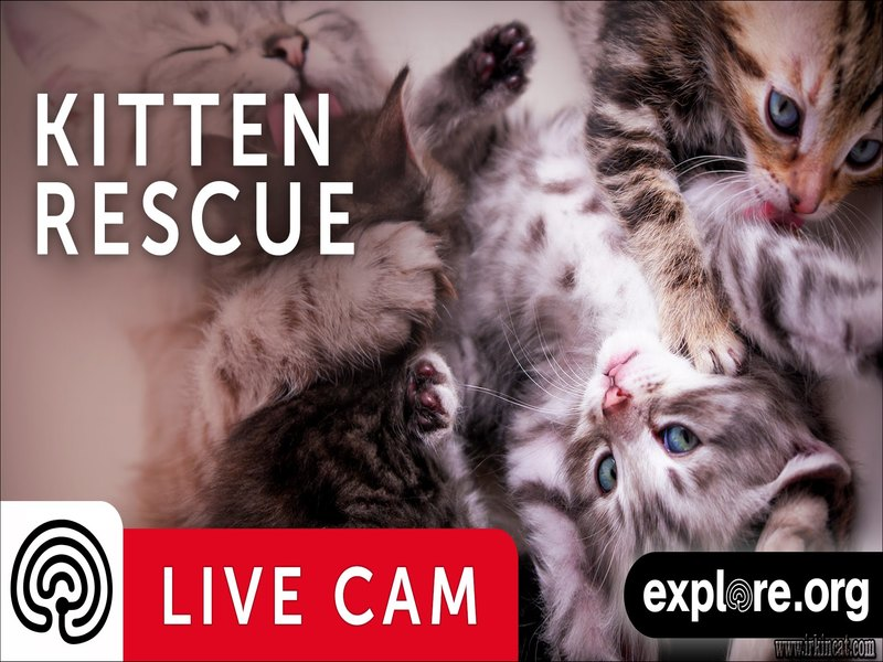 kitten-rescue-cam Wonderful Kitten Rescue Cam on Firefighter's Helmet Cam, Look at This!