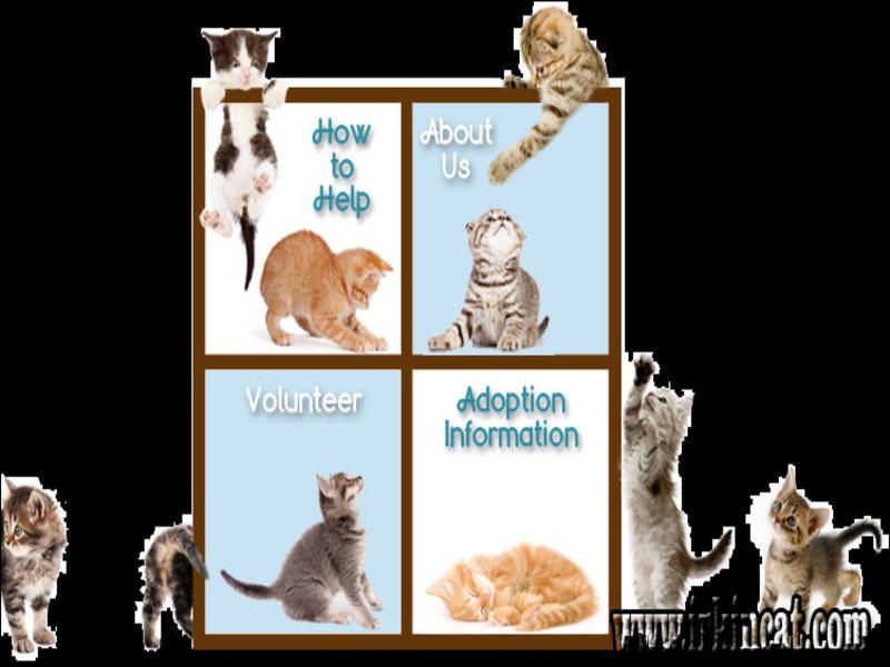 kitten-rescue-michigan Best Kitten Rescue Michigan Bloggers You Need to Follow