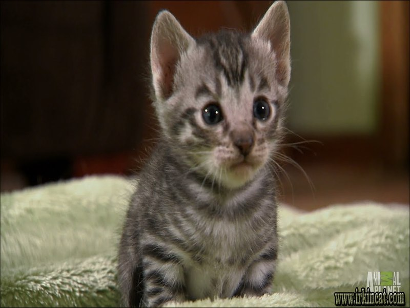 too-cute-kittens-full-episode Too Cute Kittens Full Episode Explained in This Videos